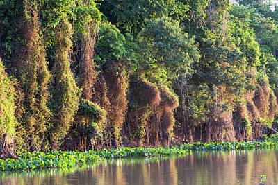 Brazil, Mato Grosso, The Pantanal, Rio Art Print