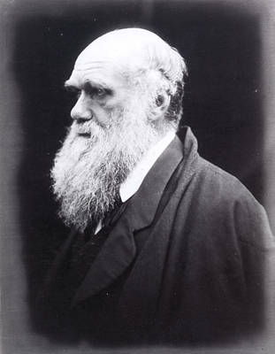 Charles Darwin (1809-1882) Art Print by Granger