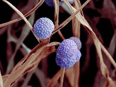 Fungal Cells Art Print