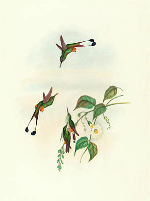Old Boots Drawing - John Gould And H.c by Litz Collection