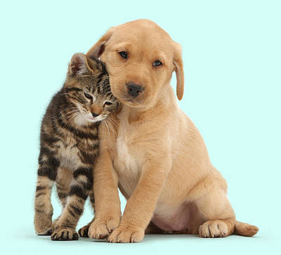 Lab Pup Photograph - Kitten And Puppy by Mark Taylor