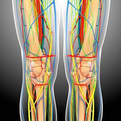 Knee Anatomy Art Print by Pixologicstudio/science Photo Library
