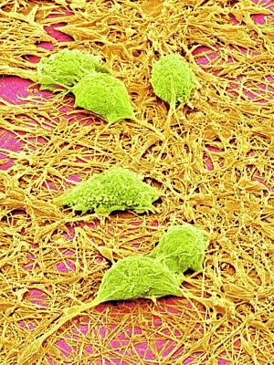 Nervous System Cells Art Print by Susumu Nishinaga