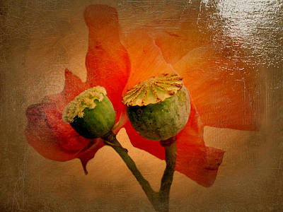 Invitations Painting - Poppy by Heike Hultsch