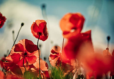 Poppies Field Photograph - Poppy Meadow by Nailia Schwarz