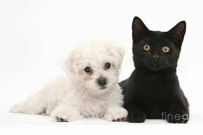 House Pet Photograph - Puppy And Kitten by Mark Taylor