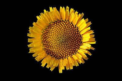 Digital Digital Art - Spring Wild Flower by George Atsametakis