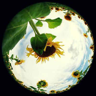 Just Desserts - Sunflowers by Falko Follert