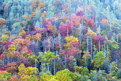 Appalachian Mountains Photograph - Tennessee, Great Smoky Mountains by Jamie and Judy Wild