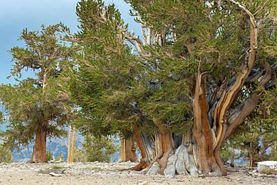 Usa, California, Inyo National Forest Art Print