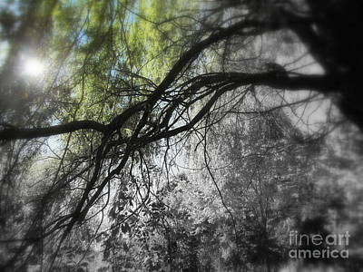 Photograph - Weeping Willow by France Laliberte