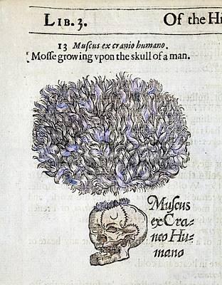 Potions Photograph - 1597 Gerard's Herbal Moss On Human Skulls by Paul D Stewart