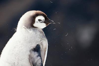 Cape Washington, Antarctica Art Print