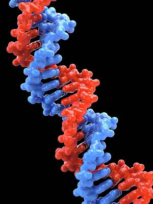 Nucleic Photograph - Dna Molecule by Maurizio De Angelis
