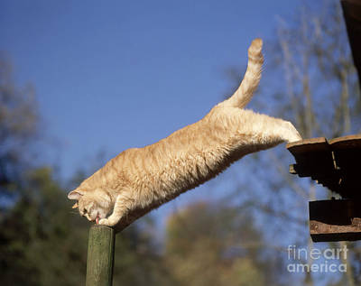 Photograph - Domestic Cat by Hans Reinhard