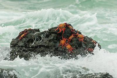 Santa Cruz Island Photograph - Ecuador, Galapagos National Park by Jaynes Gallery