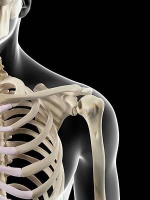 Human Shoulder Bones Art Print