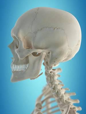 Human Head Photograph - Human Skull by Sciepro