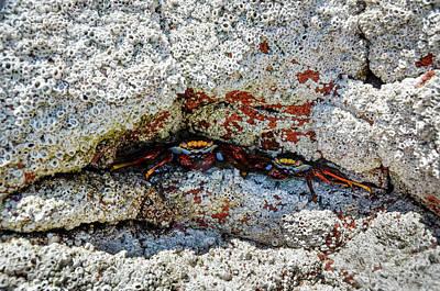 Crab Traps Photograph - Isla De Espiritu Santo, Baja, Mexico by Mark Williford