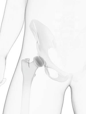 Male Pelvis Bones Art Print by Sciepro/science Photo Library
