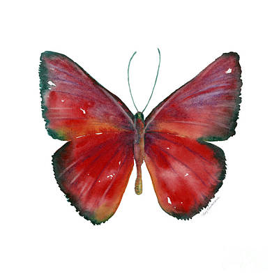 Background Painting - 16 Mesene Rubella Butterfly by Amy Kirkpatrick