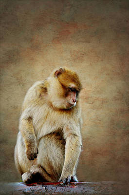 Ape Mixed Media - Monkey by Heike Hultsch