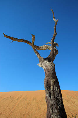 Dead Valley Photograph - Namibia by Ton Koene