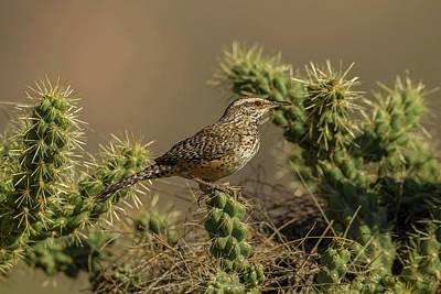 Wren Photograph - Usa, Arizona, Sonoran Desert by Jaynes Gallery