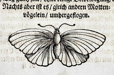 1683 Maria Merian Black Veined White Art Print by Paul D Stewart