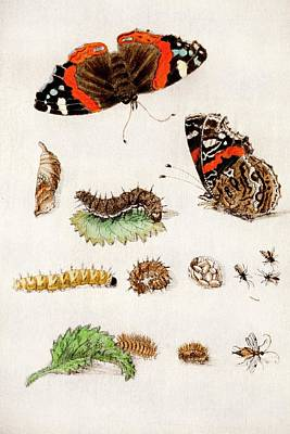 Painter Photograph - 1683 Maria Sybella Merian Metamorphosis by Paul D Stewart