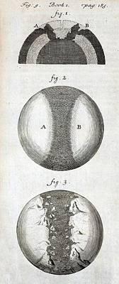 1684 Thomas Burnet Continental Drift Art Print by Paul D Stewart