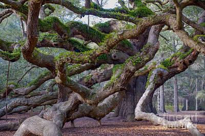 Angel Oak Tree Unique View Art Print