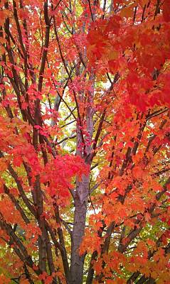 Fall Colors Photograph - Autumn Color by Kenny Glover