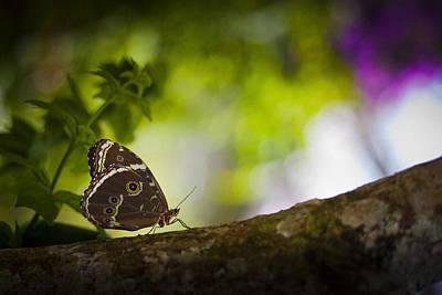 Animal Watercolors Juan Bosco - Butterfly by Bradley R Youngberg