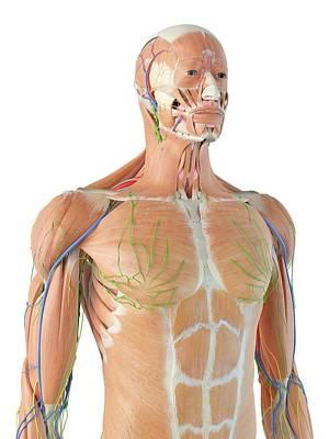 Human Anatomy Art Print by Sciepro