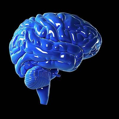 Human Brain Art Print by Sebastian Kaulitzki