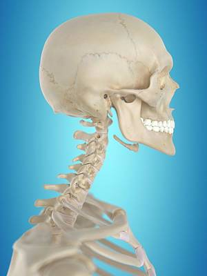 Human Skull Photograph - Human Skull by Sciepro