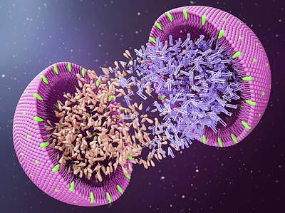 Exploded View Photograph - Lipoprotein by Maurizio De Angelis