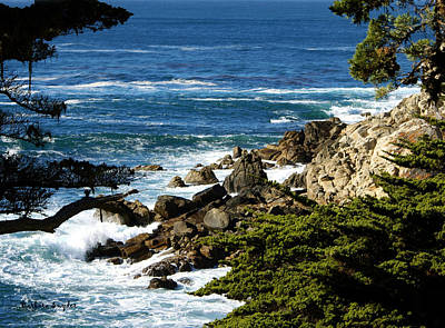 17 Mile Drive Detail Art Print by Barbara Snyder