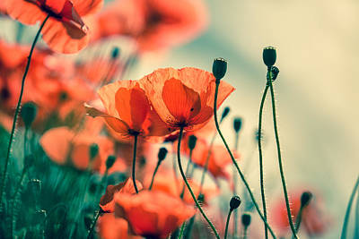Soft Photograph - Poppy Meadow by Nailia Schwarz