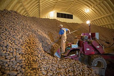 Potato Farming Art Print by Jim West