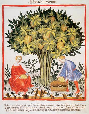 Tacuinum Sanitatis, Medieval Health Art Print by Prisma Archivo