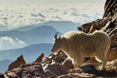Usa, Colorado, Mount Evans Art Print