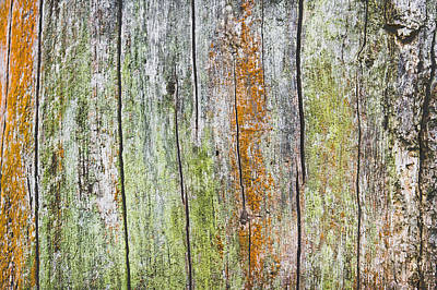Abstact Photograph - Wood Background by Tom Gowanlock