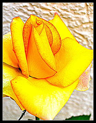 Photograph - Flowers Flowers And Flowers by Anand Swaroop Manchiraju