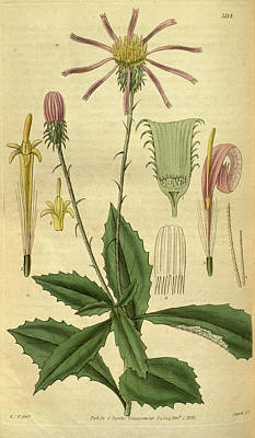 Botanical Print By Sir William Jackson Hooker Art Print by Quint Lox