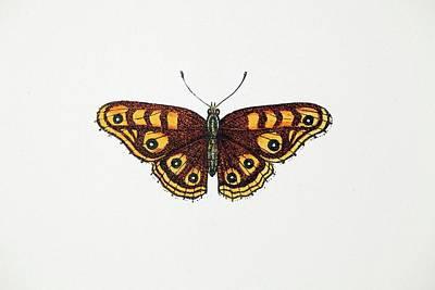 1717 Albin's Hampstead Eye Lost Butterfly Art Print
