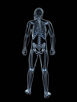 Male Skeleton Art Print by Sciepro/science Photo Library
