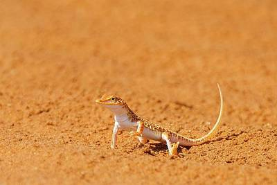 Behind The Scenes Photograph - African Reptiles by Shannon Benson