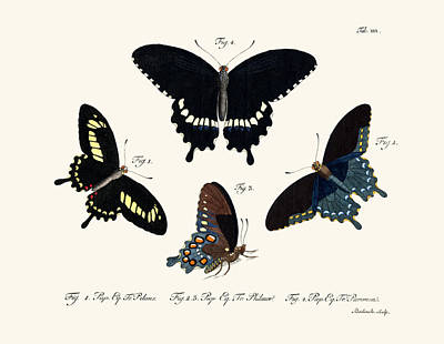 Blue Swallowtail Drawing - Butterflies by Splendid Art Prints